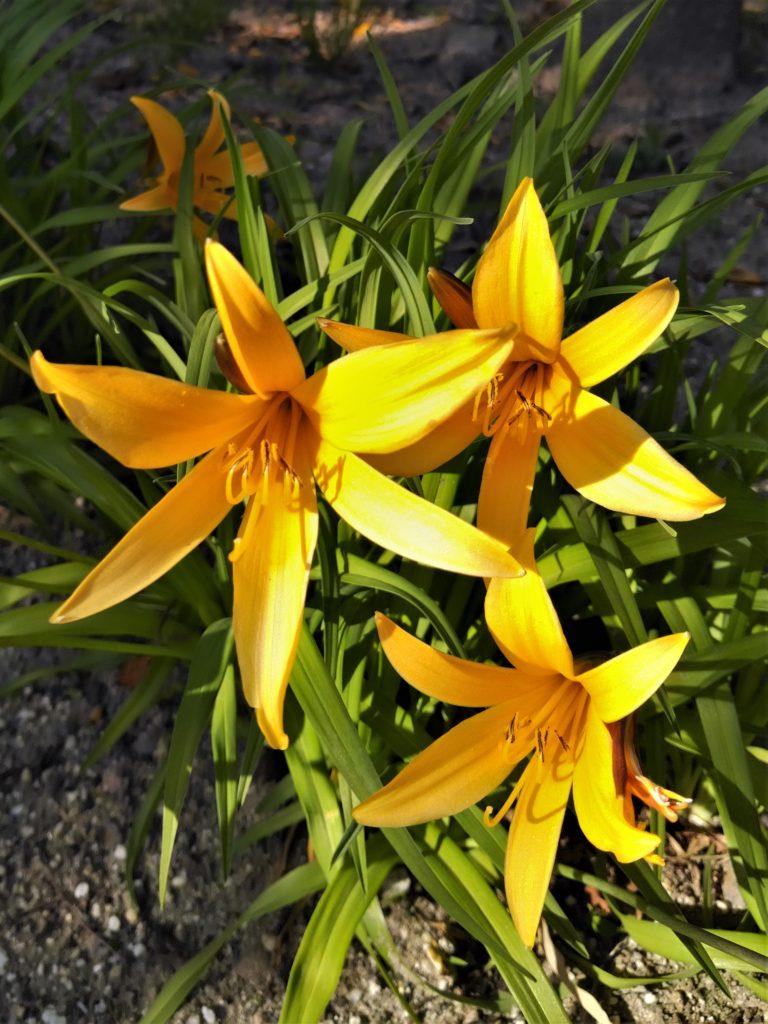 パーロードの花4月3