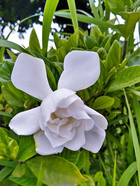 パークロードの花6月1